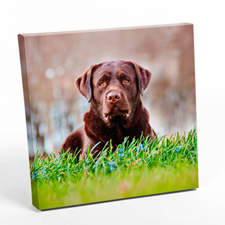best prices for 36 inch x 36 inch Square Canvas